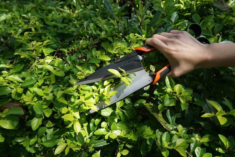 MIDDLE CARBON STEEL TOPIARY SHEARS WITH BLACK FINISHED AND POLISHED