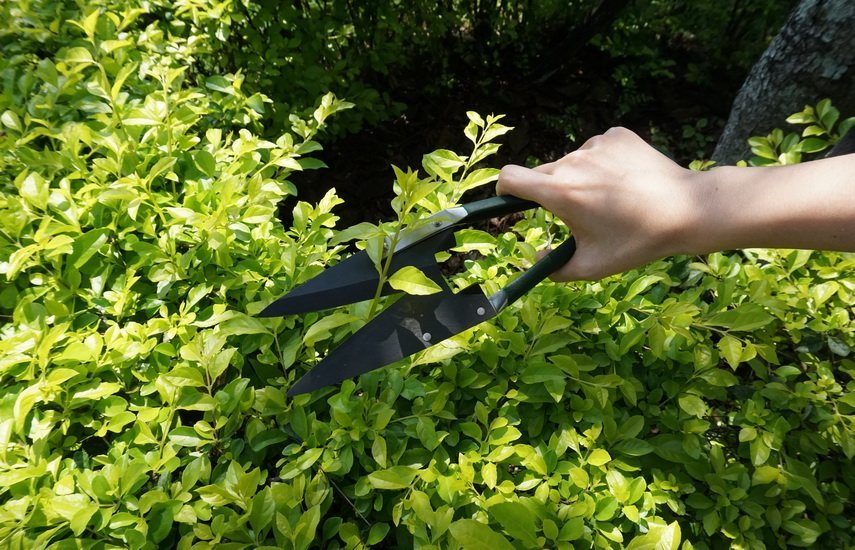 MIDDLE CARBON STEEL TOPIARY SHEARS WITH BLACK FINISHED