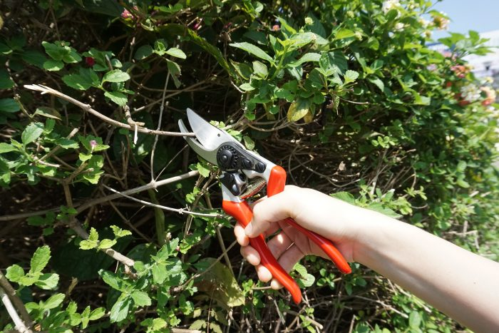 SK5 DROP FORGED BY PASS PRUNING SHEARS WITH BLACK FINISHED AND POLISHED